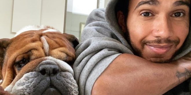 Lewis Hamilton blasted for flaunting dog's vegan diet - while on a private jet